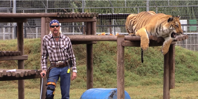 Fanatical zoo-keeper, Joe Exotic, poses with one of his many tigers. His animal holding practices are widely controversial due to their harsh and cheap manner.