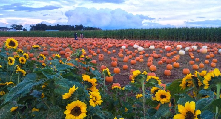 A local pumpkin patch in Spartanburg. (Photo courtesy (https://kiddingaroundspartanburg.com)