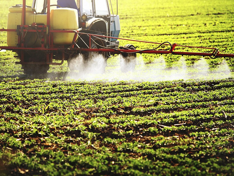The Chlorpyrifos insecticide is sprayed across crops to deter insects.